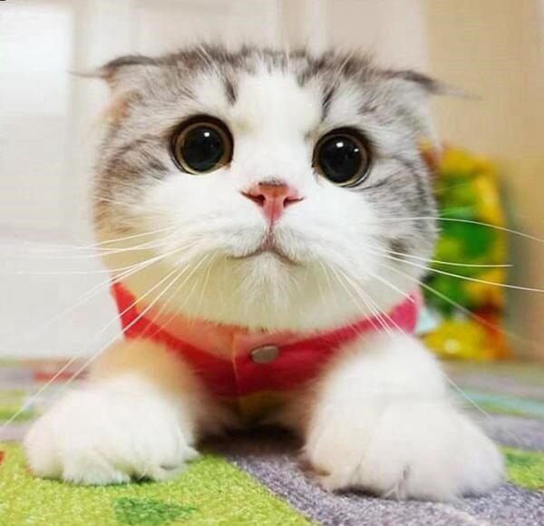 petsmart canada cat repellent